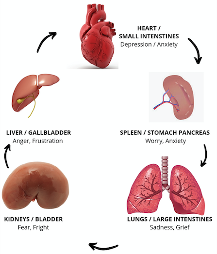 Chinese Medicine and liver