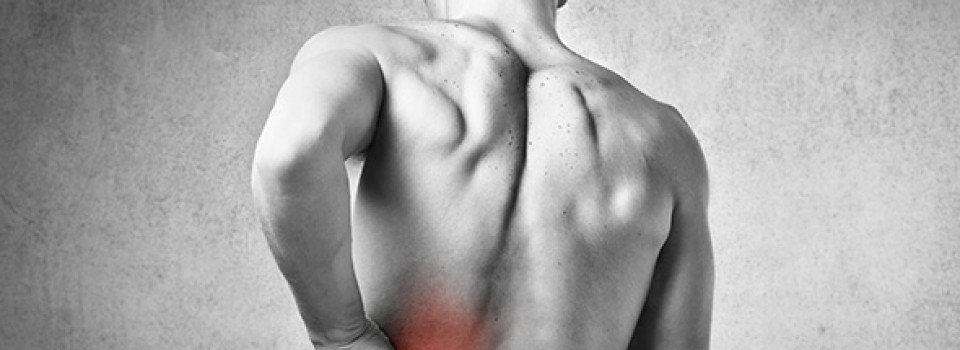 Muscular-skeletal